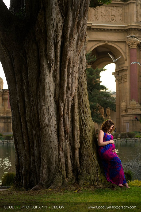 Maternity Photography by a tree at the Palace of Fine Arts in San Francisco